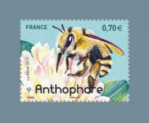 Abeille_Anthophore_2016_GF