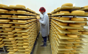 2048x1536-fit_to-go-with-afp-story-by-anne-sophie-lasserre-a-refiner-controls-cure-nantais-cheeses-a-traditional